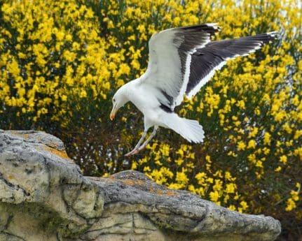 vogel, seagull, Wildlife, natuur, outdoor, boom, dier