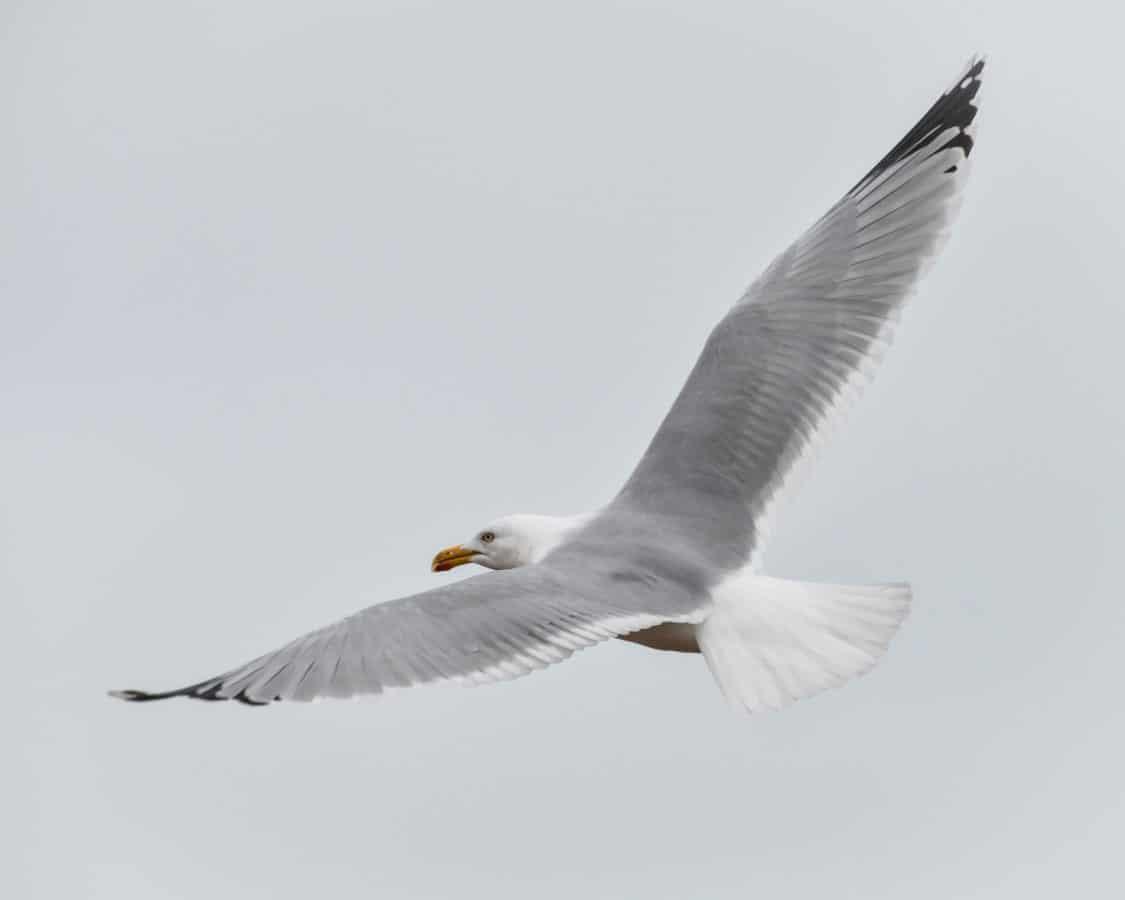 Tiere, Vogel, Flug, Seevogel, Feder, Himmel, Möwe