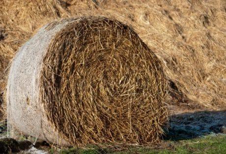 трева, слама, природата, на открито, земеделие, лято, слама