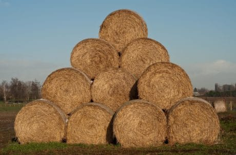 straw, grass, outdoor, sky, agriculture, outdoor