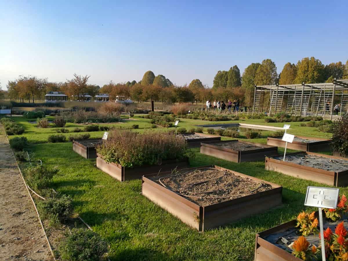 ботаническа градина, дърво, къща, трева, парникови, Градина, Външен, синьо небе