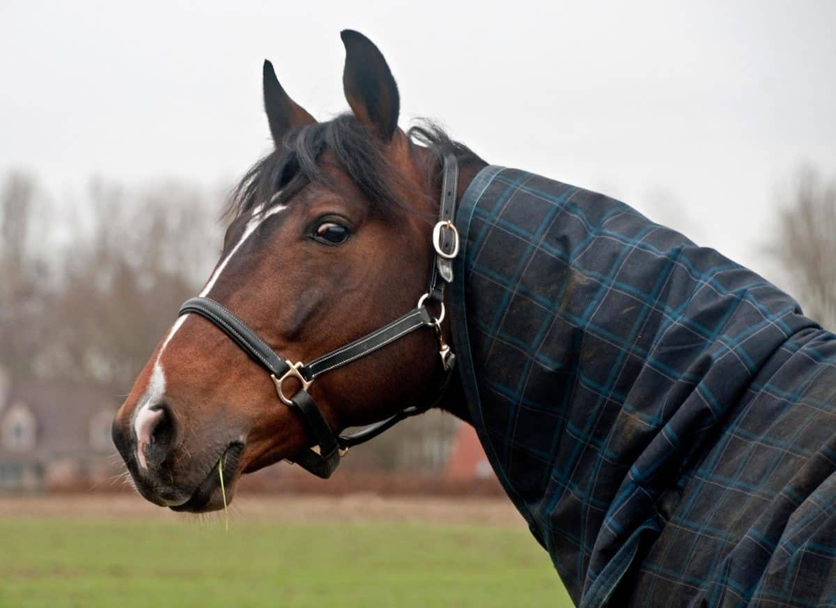 кавалерия, кон, портрет, открито, небето, тревата, кафяв