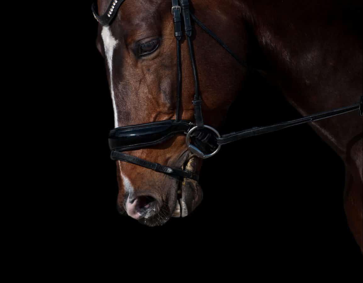 mørk, natt, skygge, portrett, dyr, bissel, hest, hodet, belte