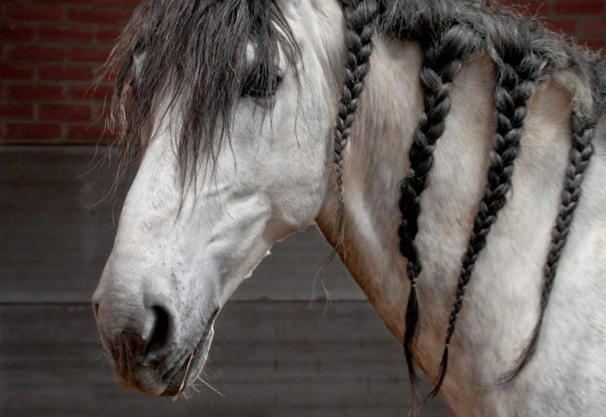 Portrait, cheval blanc, animal, tête, yeux, plein air