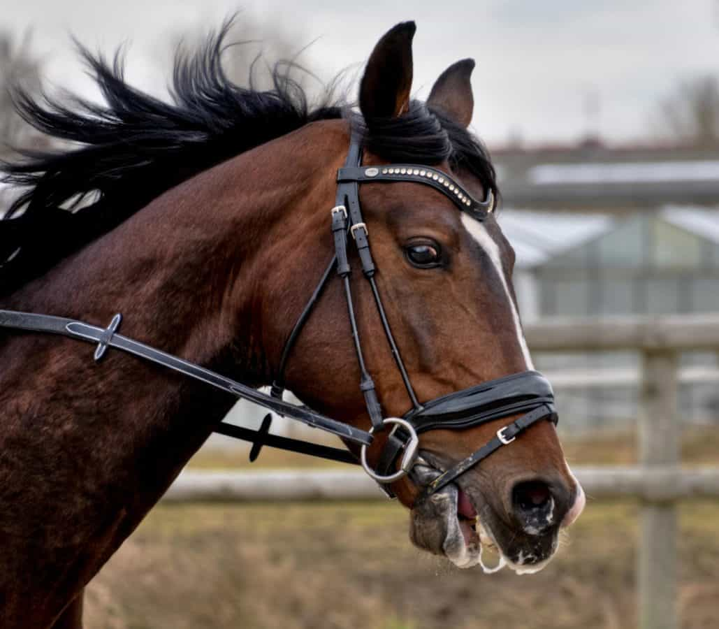 animale, cal, cavalerie, coama, cap, sport