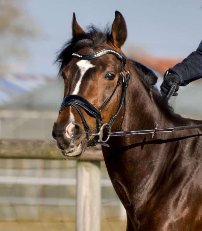 Portrait, animaux, cheval, plein air, ceinture, sport