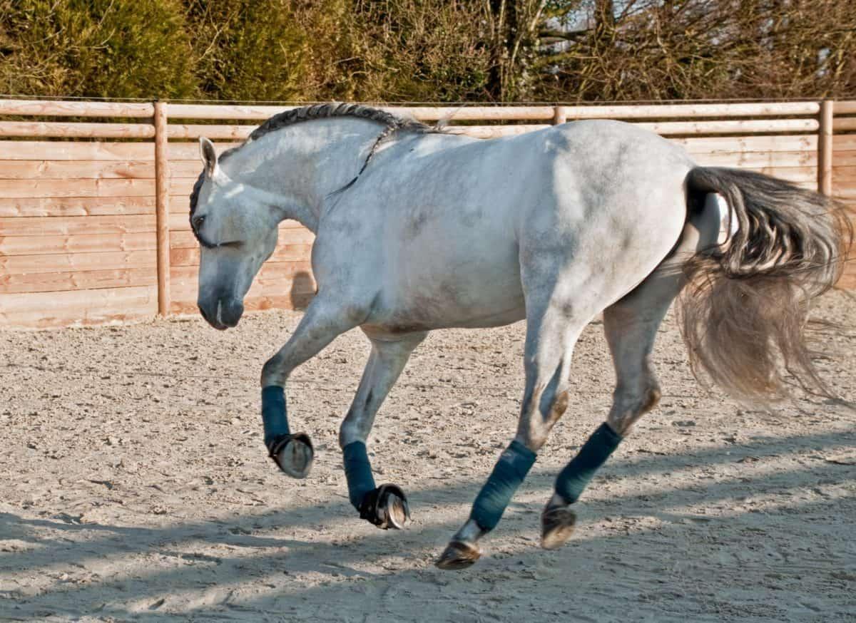 sabbia, terra, cavallo, animale, terra, all'aperto, salto, recinto