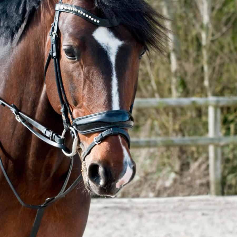 brown, horse, stallion, animal, cavalry