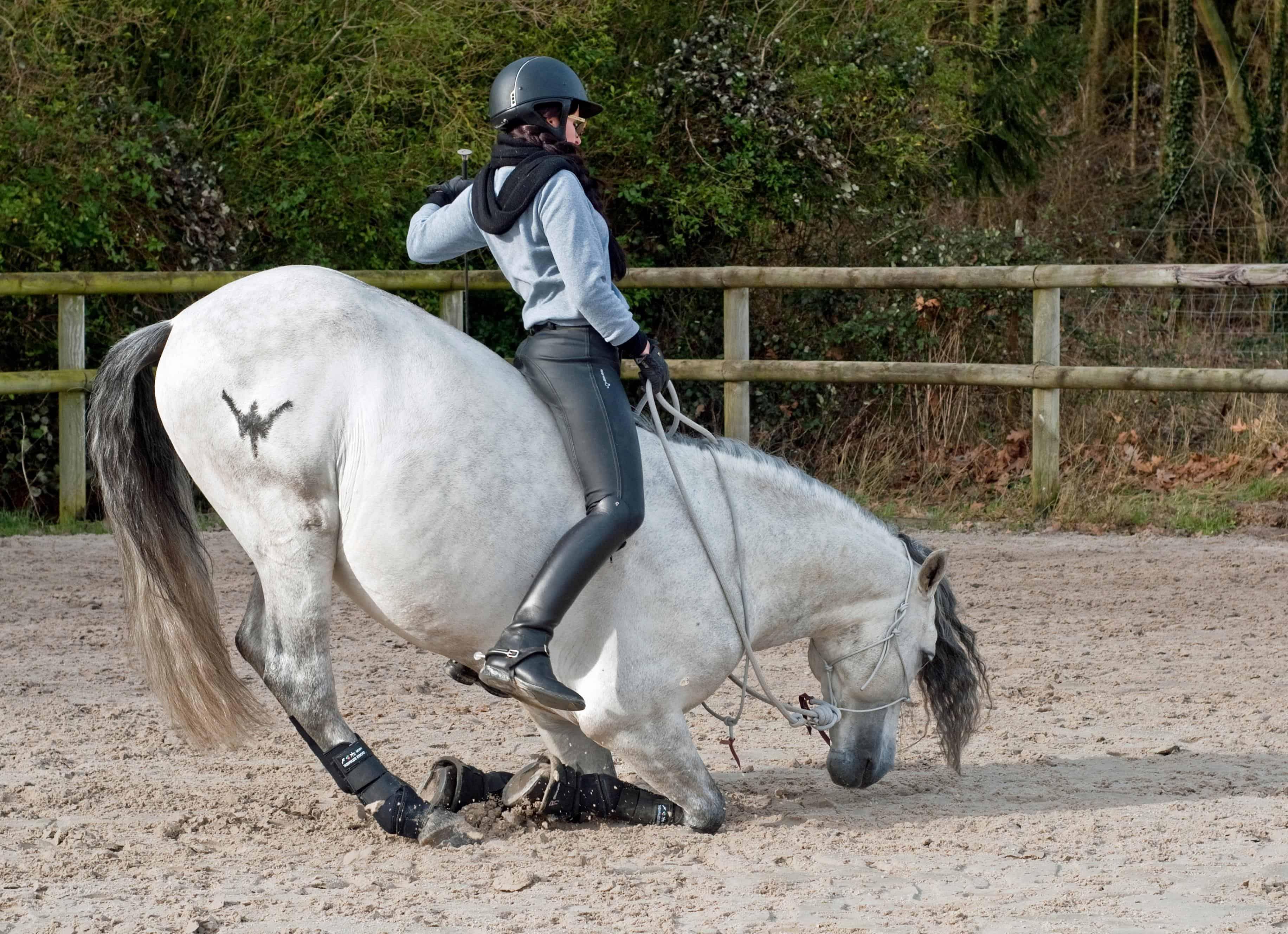 Управление лошадью картинки