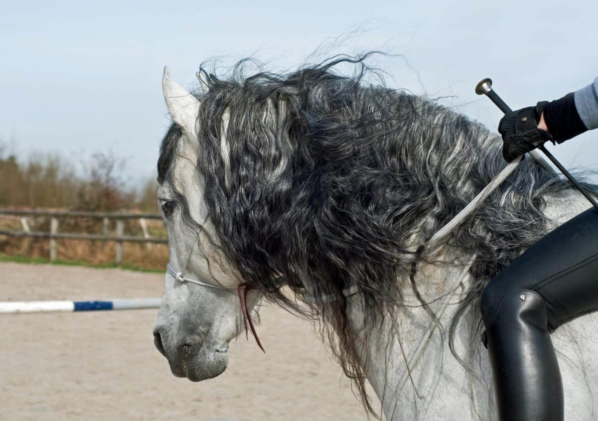 al aire libre, cabello, caballo, hombre, cielo, árbol, deporte