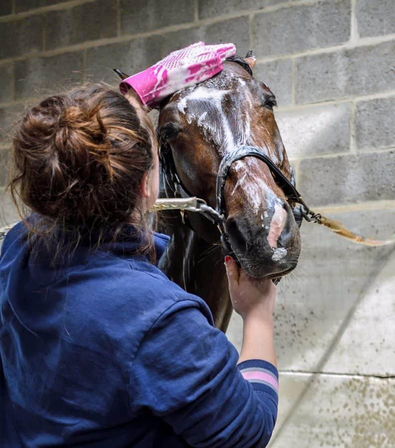 mujer caballo, sombra, cabeza, baño, agua, higiene, al aire libre