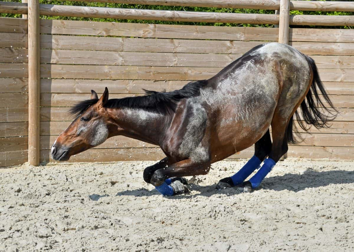 cheval, animal, cavalerie, bétail, sol, sport, sable, brun