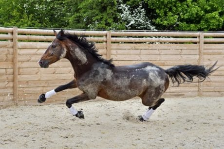 cavallo marrone, sport, Cavalleria, animali, marrone, all'aperto