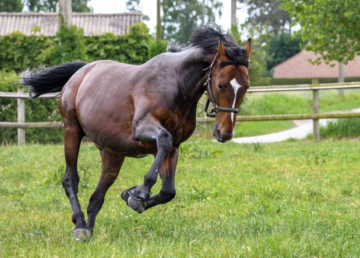 Landwirtschaft, Pferd, Rasen, springen, im Freien, Baum