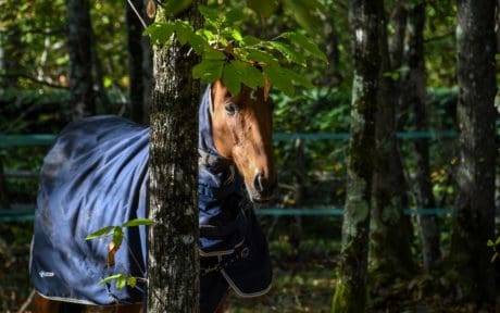 tree, horse, forest, leaf, forest, nature, outdoor