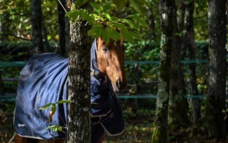 albero, cavallo, foresta, foglia, foresta, natura, outdoor