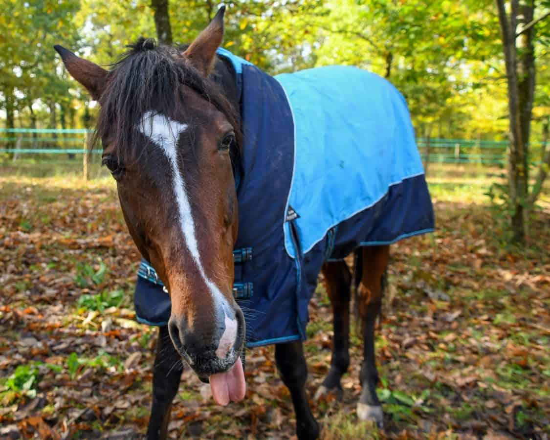 horse, cavalry, animal, grass, field, ranch, brown
