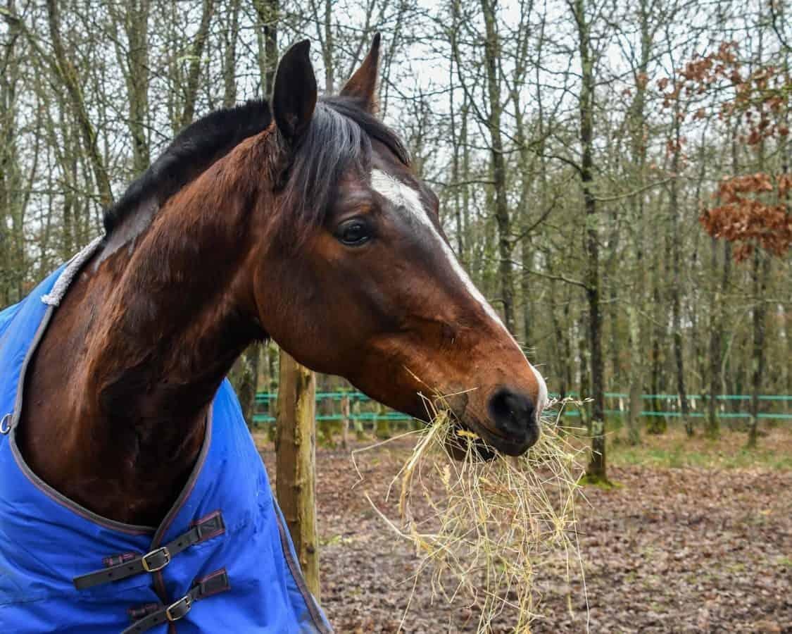 Caballería, animal, caballo, al aire libre, árboles, bosque