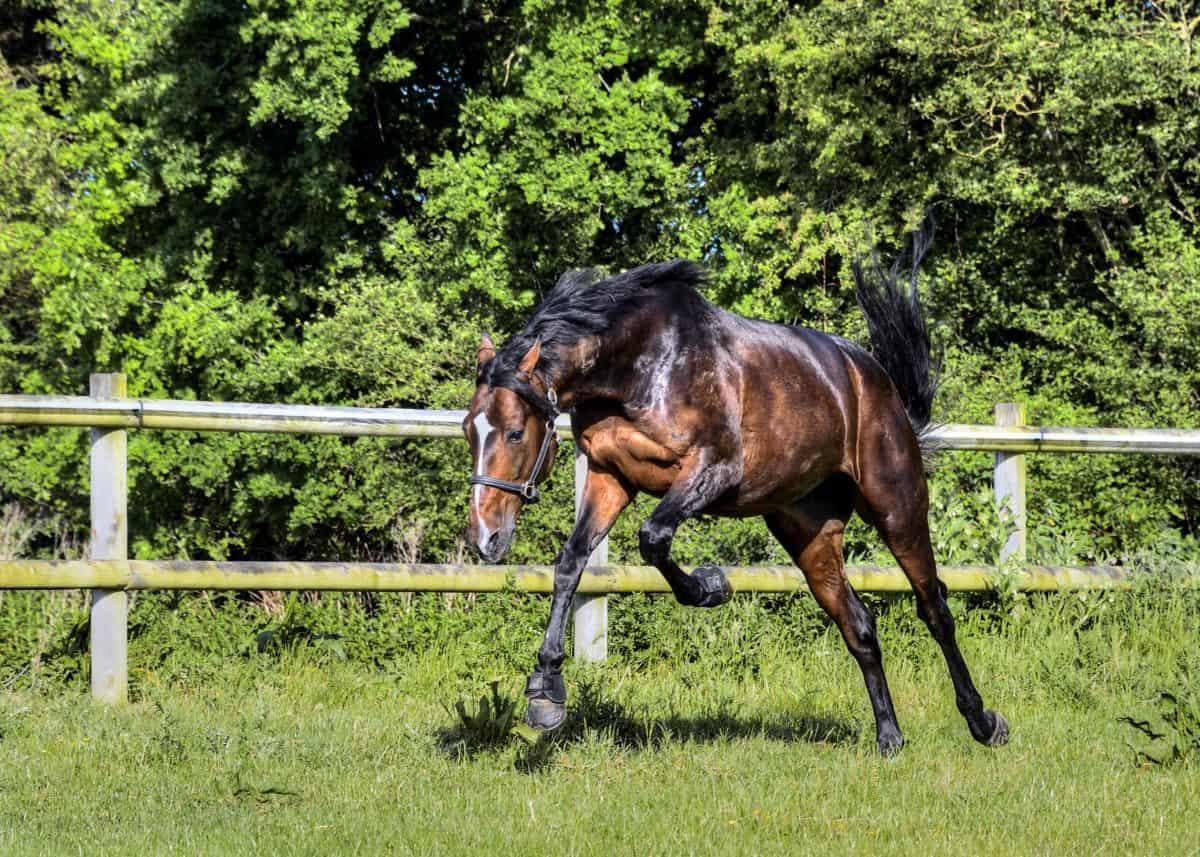 paard, gras, dier, hengst, ranch, paarden, springen