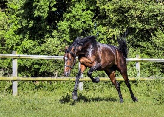horse, grass, animal, stallion, ranch, equine, jump