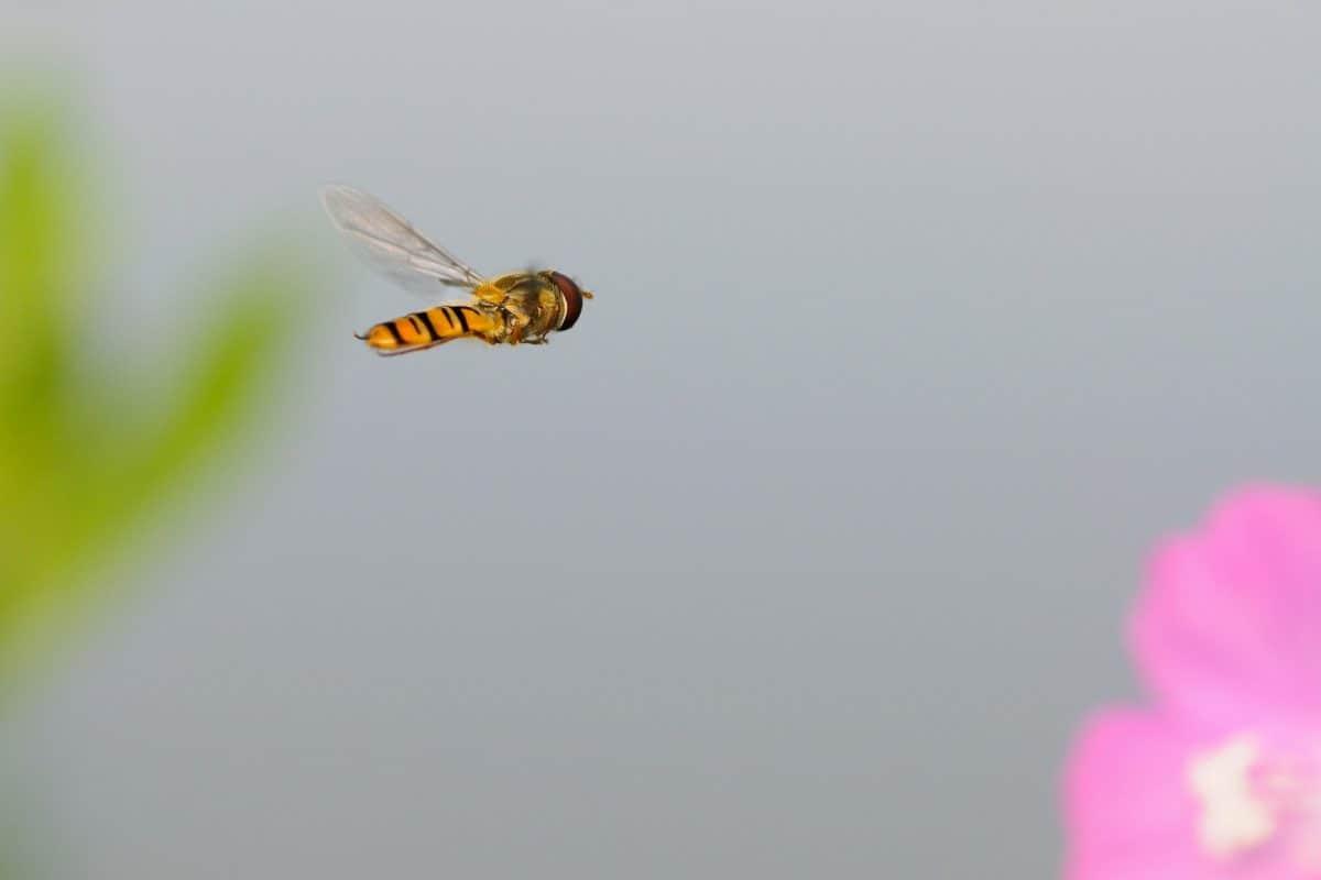 kukaca, cvijeća, prirode, arthropod, faune