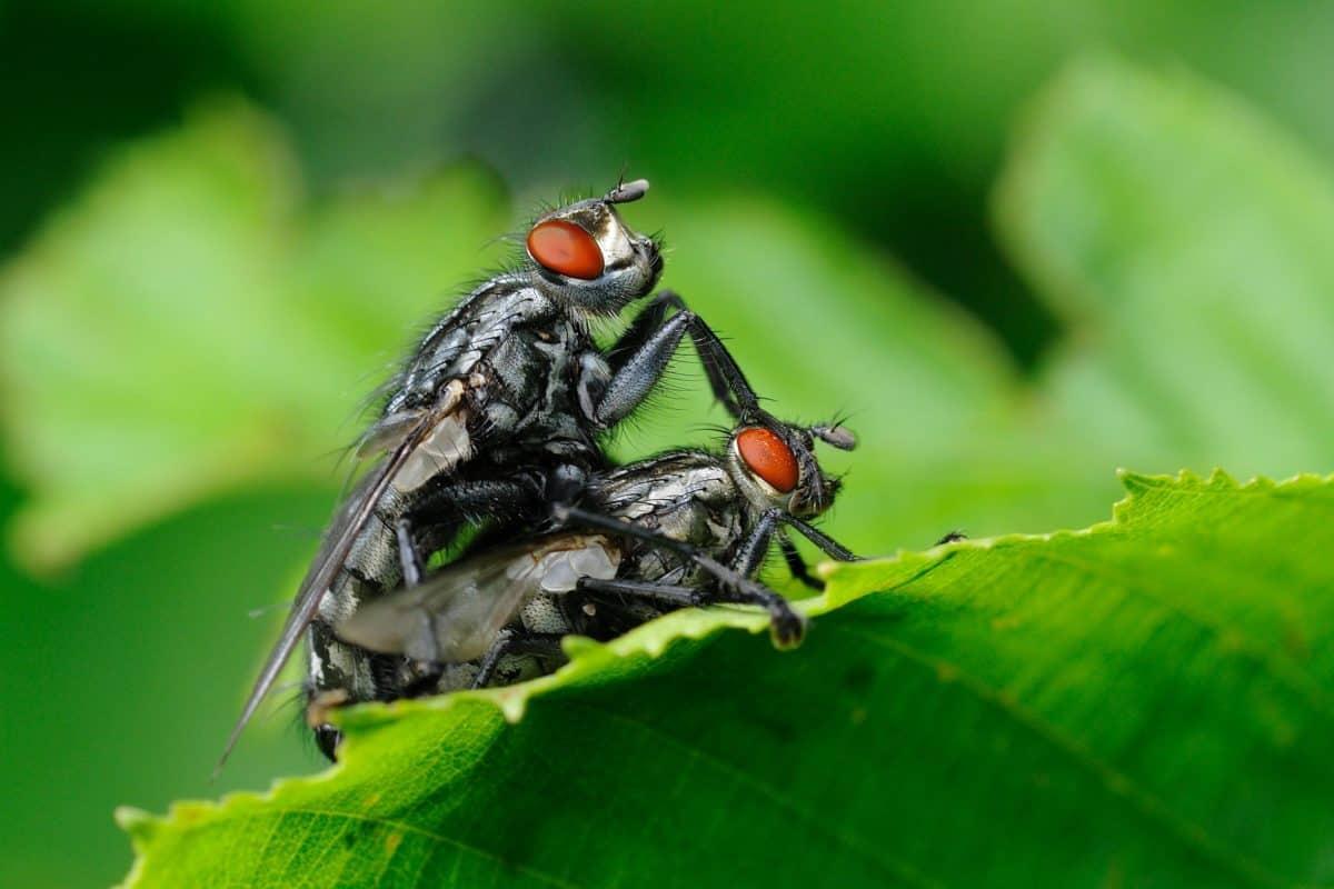 animaux, insectes, nature, vert feuille, vert, en détail