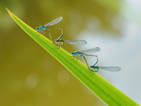 dragonfly, detail, invertebrate, insect, nature, wildlife, leaf
