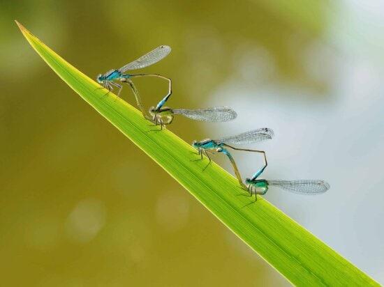 libellule, détail, invertébrés, insectes, nature, faune, feuille