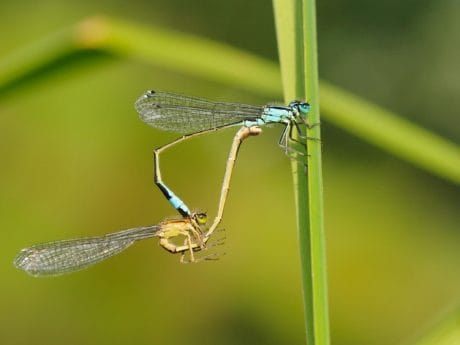 dragonfly, nature, insect, wildlife, arthropod, invertebrate