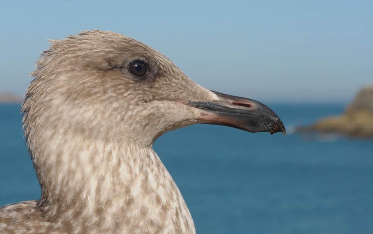 water, seagull, nature, wildlife, bird, animal, outdoor, blue sky