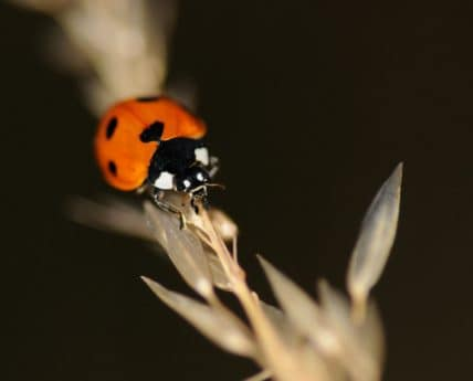 beetle, ladybug, insect, invertebrate, detail, night