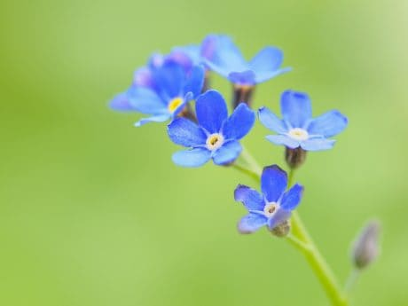 blue flower, nature, wildflower, plant, plant, summer