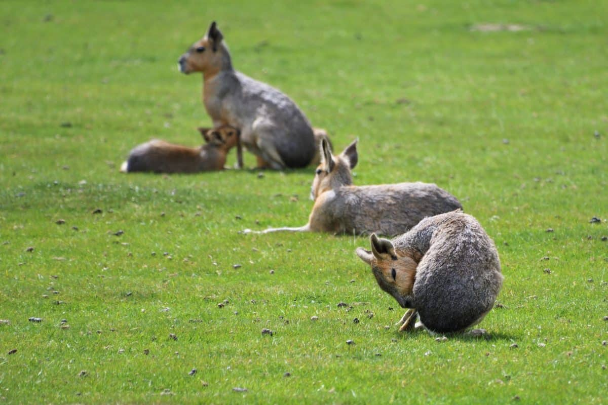 erba verde, fauna animale, all'aperto, campo,