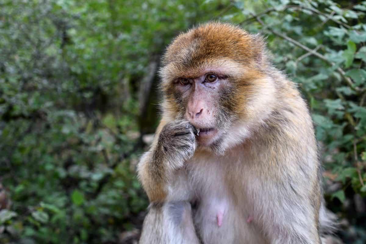 khỉ, dễ thương, động vật hoang dã, thiên nhiên, hoang dã, chân dung, linh trưởng, động vật, cây