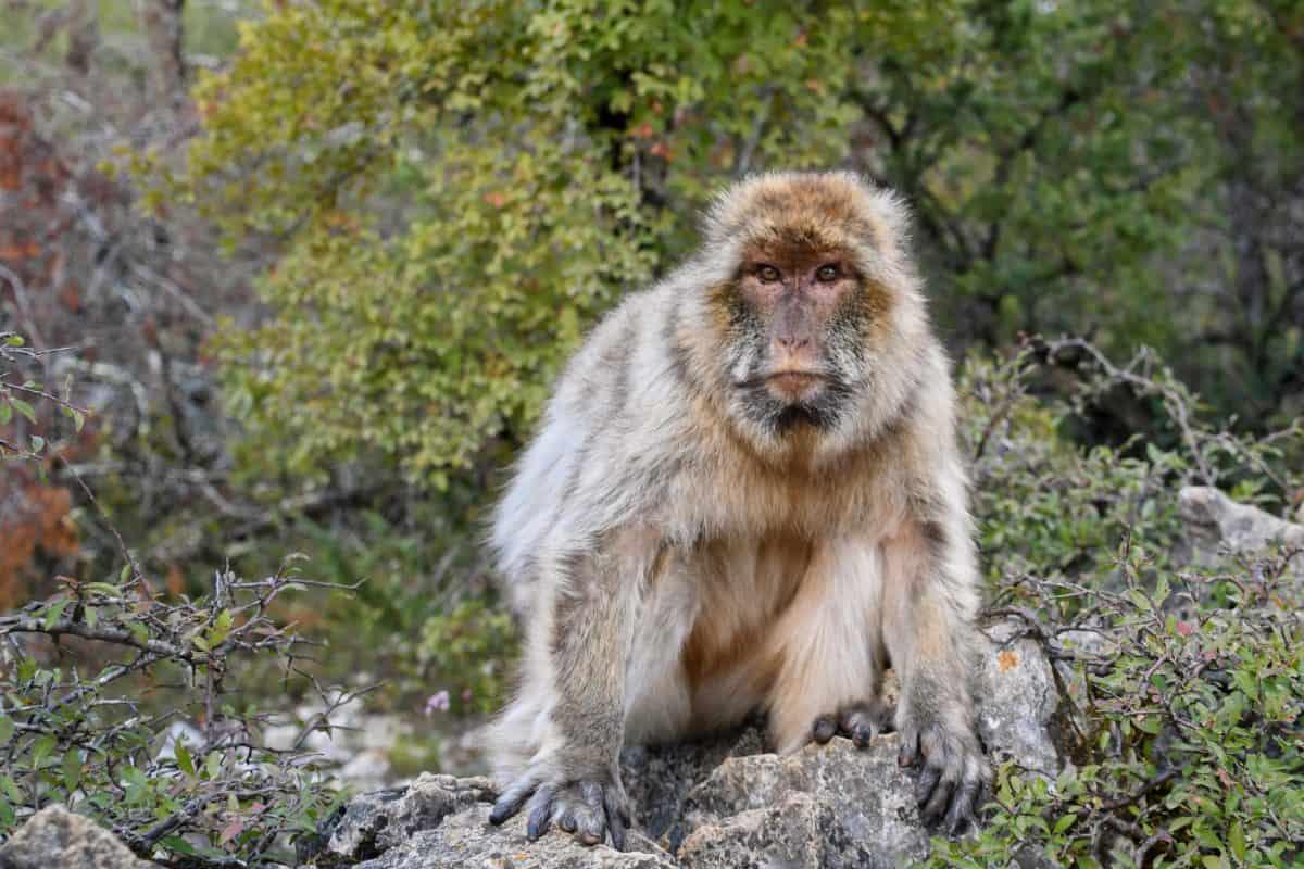 fauna selvatica, scimmia, legno, natura, selvatico, all'aperto, albero, ritratto, animale