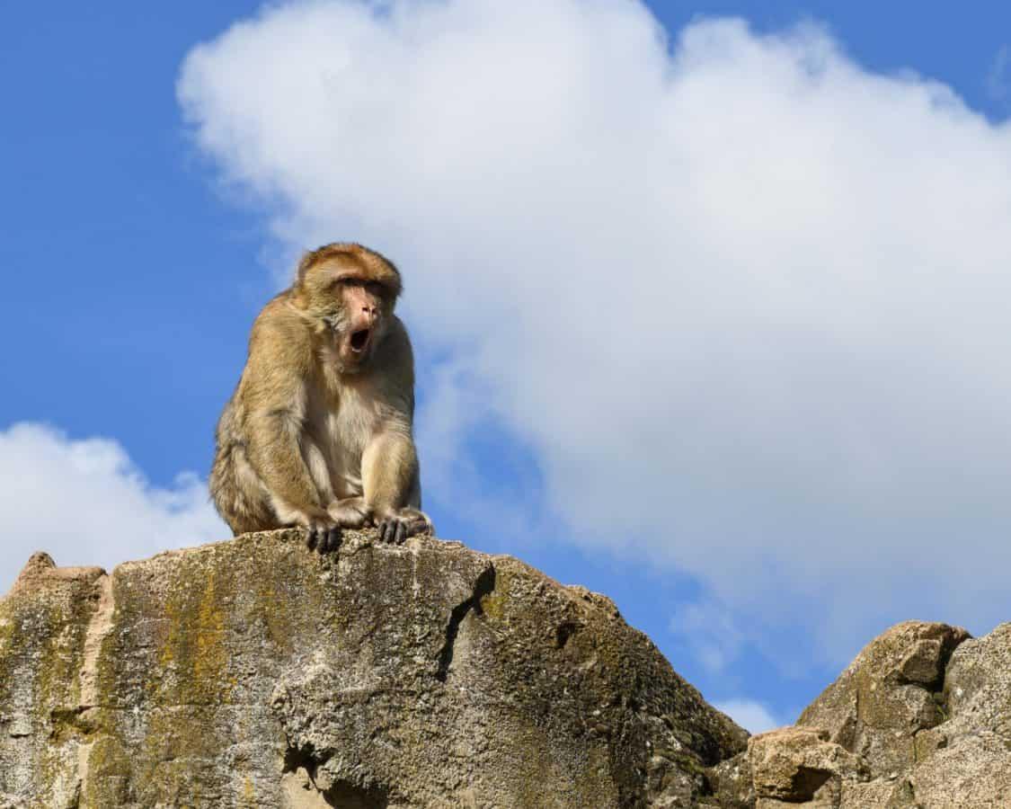 fauna, naturaleza, animal, mono, cielo, al aire libre, montaña, nube, cielo azul