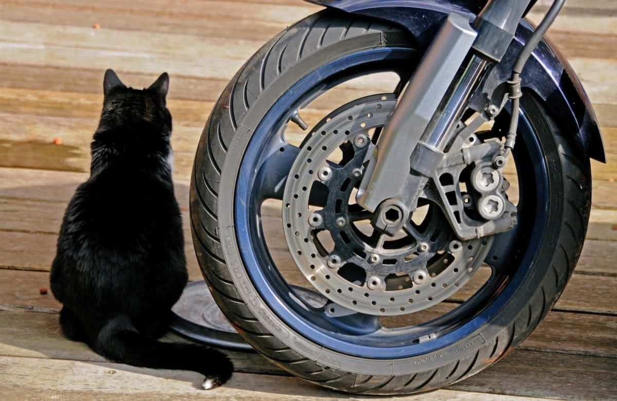 cat, ground, outdoor, wheels, motorcycles, brake, metal