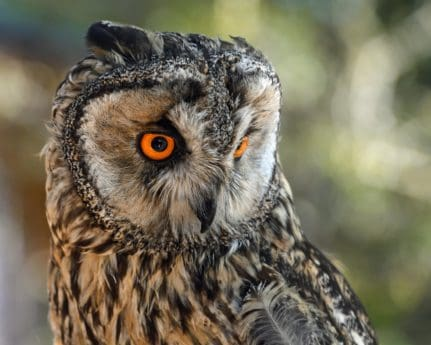 nature, wild, wildlife, bird, animal, predator, owl