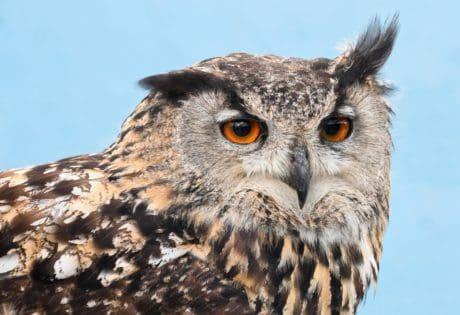 natur, fågel, uggla, vilda, vilda djur, djur
