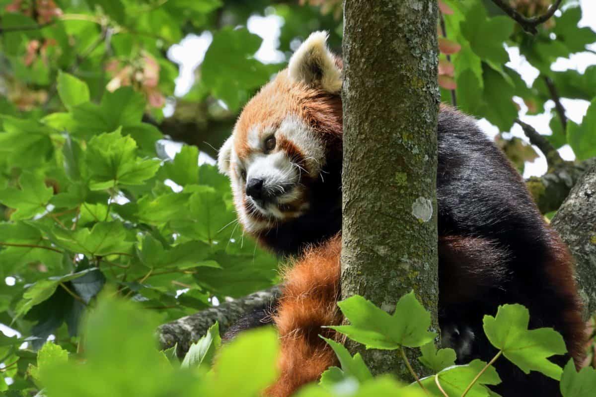 albero, natura, fauna selvatica, orso, animale selvatico, all'aperto,
