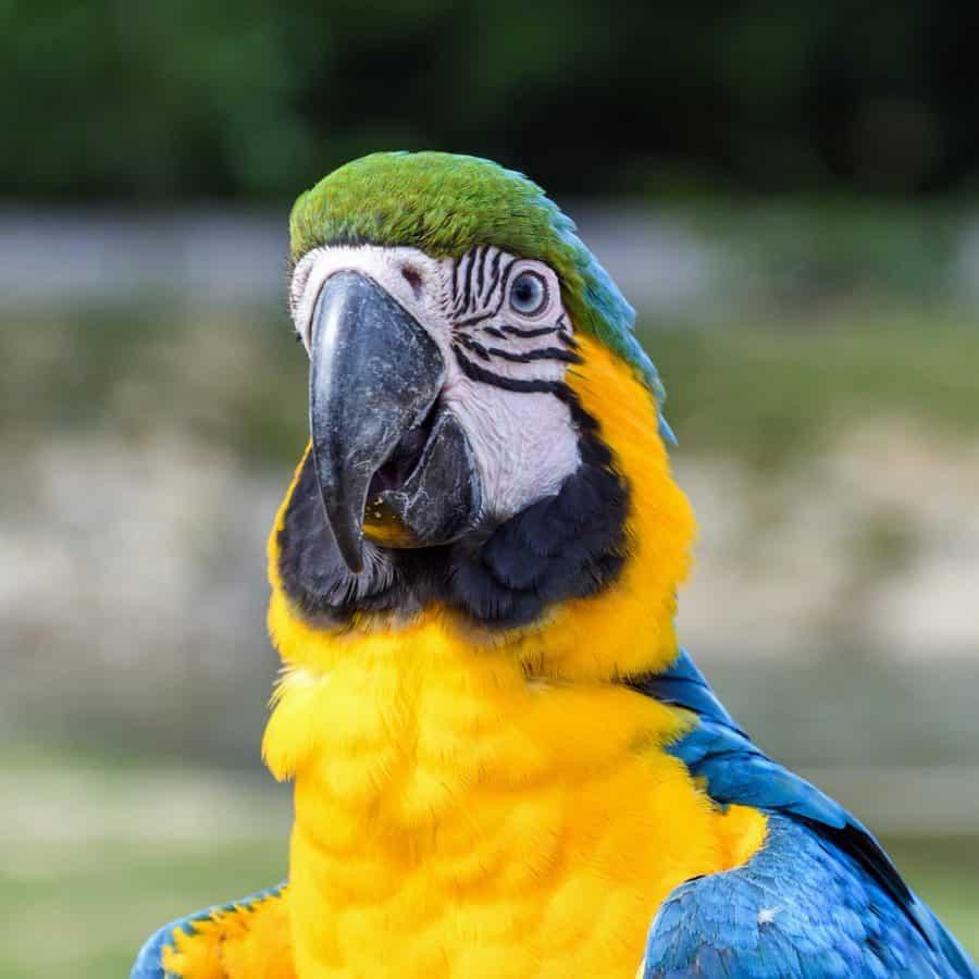 csőr, toll, madár, vad, wildlife, Ara papagáj