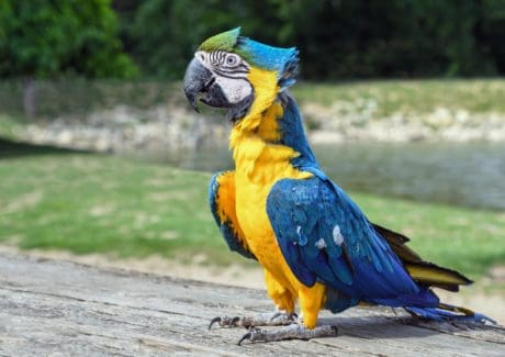 bird, nature, macaw parrot, beak, animal, colorful, feather, wildlife