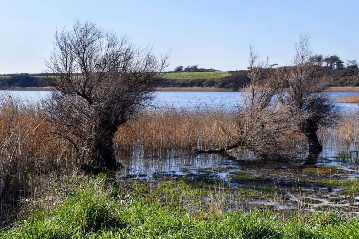 размисъл, вода, езеро, природа, река, пейзаж, гора