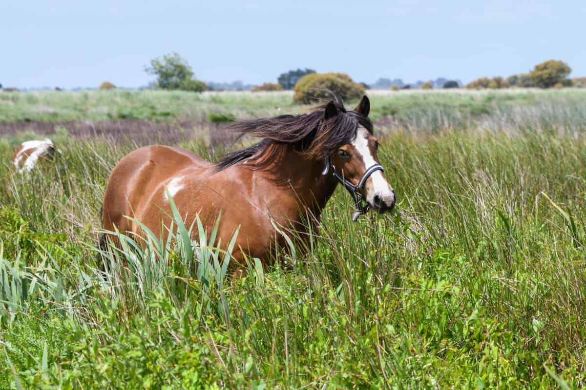 nature, field, grass, animal, horse, outdoor, brown