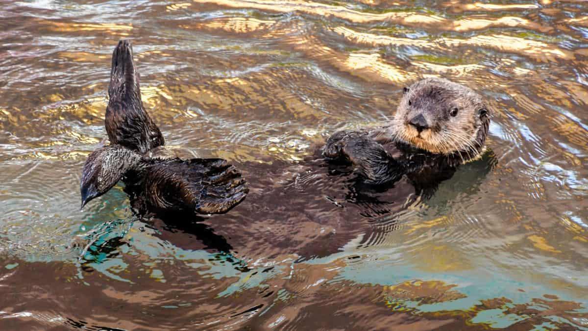 acqua, natura, marrone lontra, animale, fauna selvatica, all'aperto