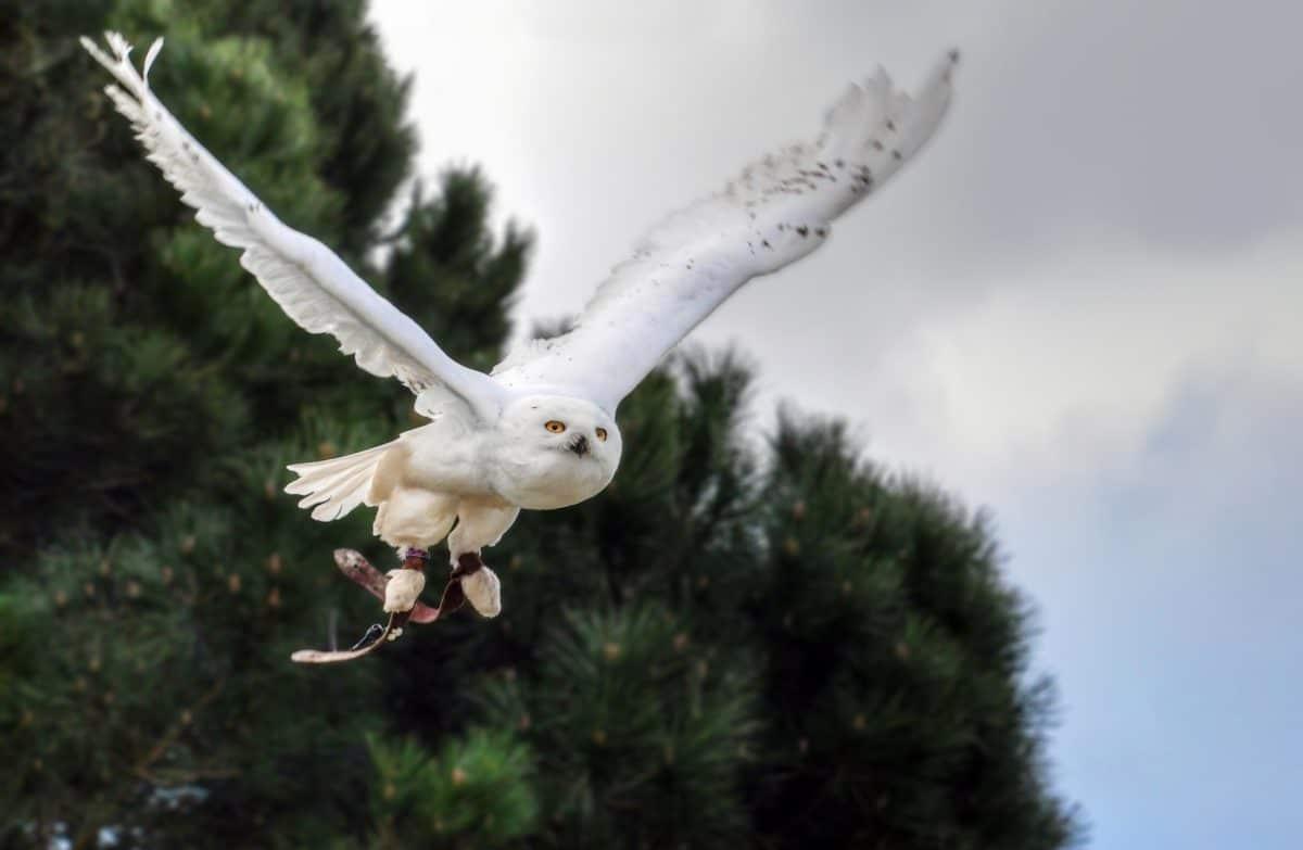 weiße Eule, Vogel, Baum, Tier, weiß, Feder, Tierwelt, Natur