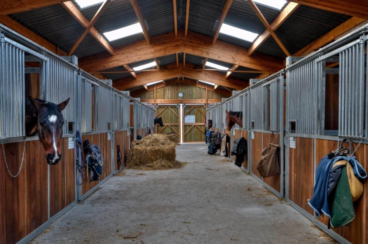кон, плевня, сено, животно, вътрешен, спорт