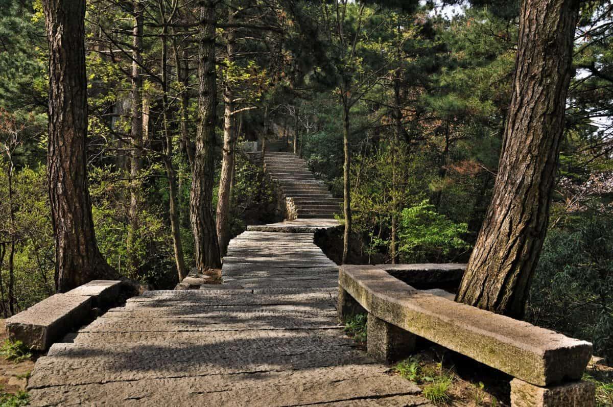 Национален парк, пейзаж, природа, пътя, дърво, гора, път, Открит