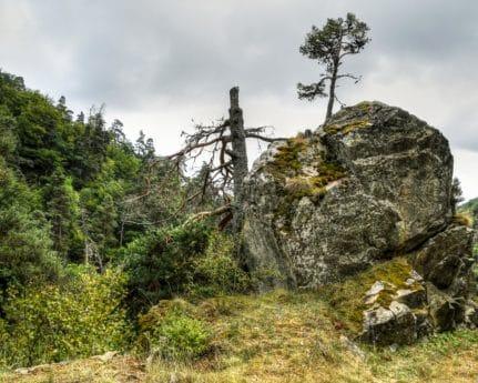 планина, дърво, природа, небе, пейзаж, на открито, трева