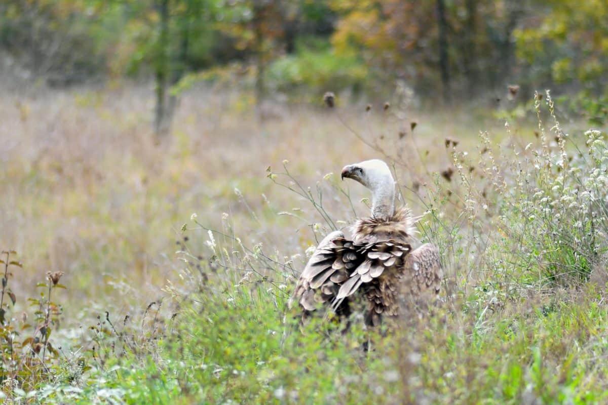 djur, vilda, natur, näbb, fjäder, fågel, gräs
